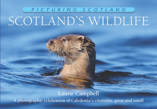 Jacket of Picturing Scotland: Scotland's Wildlife